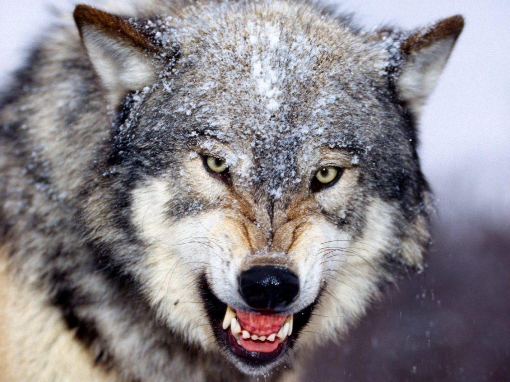 Ängste sind wie böse Hunde!