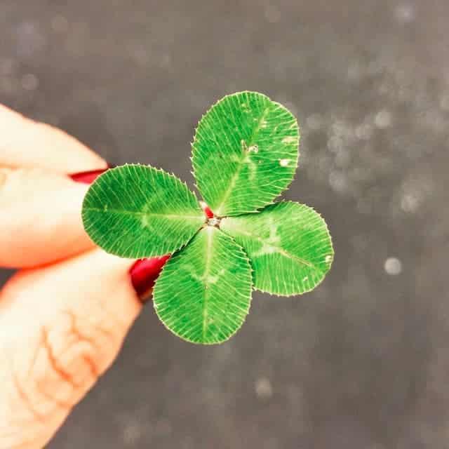 Unkraut ist nicht perfekt, aber es ist auch grün!